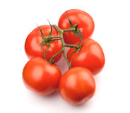 Branch of fresh tomatoes Royalty Free Stock Photography