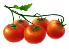 Branch with fresh tomatoes Stock Photography