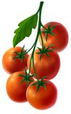 Branch with fresh tomatoes Royalty Free Stock Photo