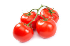 A branch of fresh tomatoes on white background. Royalty Free Stock Images