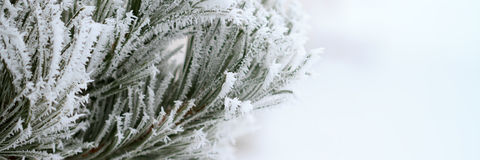 Branch with frost Royalty Free Stock Photos