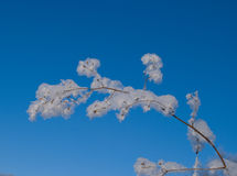 The branch in  the frost Royalty Free Stock Images
