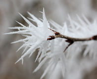 Branch with frost snowflakes macro Stock Image