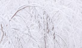 Branch of frost Royalty Free Stock Photo