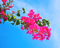 Branch full of blooms Royalty Free Stock Images