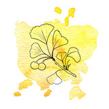 Branch of ginkgo at watercolor background. Vector branch of ginkgo at watercolor background, hand drawn medical herb, line drawing plant, floral element Stock Images