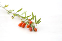 Branch with goji berries stock images