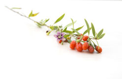 Branch with goji berries Royalty Free Stock Photo