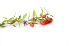 Branch with goji berries Royalty Free Stock Image