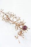 Branch of grape Stock Photos