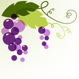 Branch of grape with leaves. Abstract vector background design t Royalty Free Stock Photo