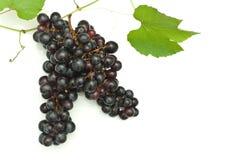Branch of grape vine Stock Image