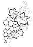 Branch grapes royalty free illustration