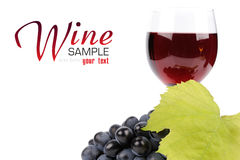 Branch of grapes and glass of wine. Isolated on white background Royalty Free Stock Image