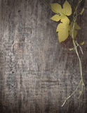 Branch of grapes on wooden boards Stock Image