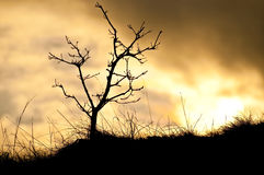 Branch and grass loom to the golden sky Stock Photography