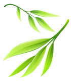 Branch with green bamboo leaves. Eps10 vector illustration  on white background Royalty Free Stock Photos