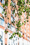 Branch of green birch tree and urban house Stock Photography