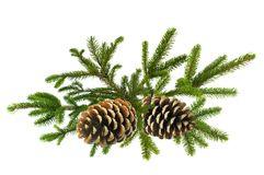 Branch of Green Christmas tree with cones isolated on white Royalty Free Stock Photos