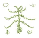 Branch of green fir tree sunlit Stock Photography
