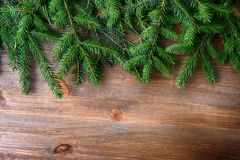 Branch of green fir tree Stock Images
