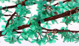 Branch with green flowers. Abstract background. Stock Photography