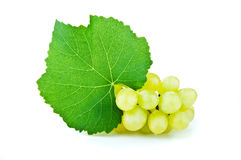 Branch of green grapes Stock Photography