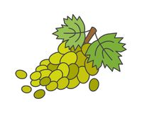Branch of Green Grapes Flat Vector Icon. Bunch of green grapes with leaves on stem flat style vector icon isolated on white background. Ripe fruit cartoon Stock Images
