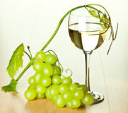 Branch of green grapes and glass of wine Royalty Free Stock Images