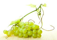 Branch of green grapes and grapevine Stock Images
