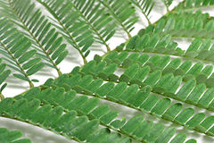 Branch of green leaves Stock Images