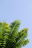 Branch with green leaves. Against the sky Royalty Free Stock Photos