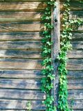 Branch with green leaves on the background of a wooden wall. Branch with green leaves on the background of a wooden house Stock Photos