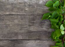 Branch with green leaves on rustic background. Free copy space.