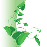 Branch with green leaves, vector decoration Stock Photos