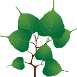 Branch with green leaves, vector illustration Stock Photo