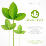 Branch with green leaves on white & text Royalty Free Stock Image