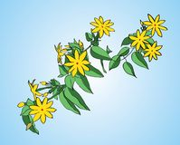 Branch with green leaves and yellow flowers Royalty Free Stock Photos