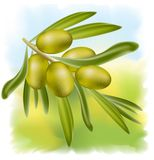 A branch of green olives. Stock Photography