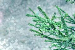 A branch of green spruce on a blue-gray sparkling background, with a bokeh effect. Christmas tree on a plain background