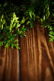 Branch of green thai. On a wooden background Royalty Free Stock Images