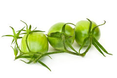 Branch of green tomatoes Royalty Free Stock Photography