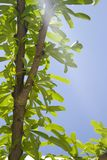Branch with green tree on blue sky Stock Photography