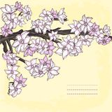Branch of hand drawn cherry blossom Royalty Free Stock Photo