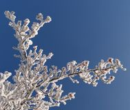 Branch in hoarfrost. Hoar frost covering bare tree branches on a Winter's day Stock Photography