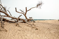 Branch in Hoge Veluwe. Branch in landscape in Holland Hoge Veluwe Royalty Free Stock Photos