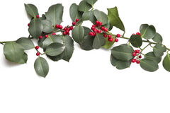 Branch of holly. And berries on the white Stock Photo