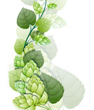 Branch of hops. On a white background vector illustration
