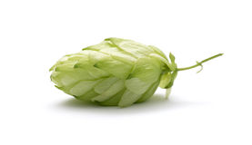 Branch of hops. On a white background Stock Photography