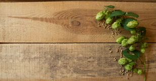 Branch of hops on a wooden Royalty Free Stock Photo